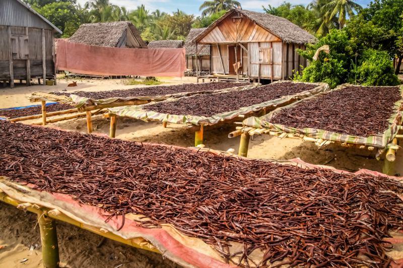 coltivazione Vaniglia Madagascar