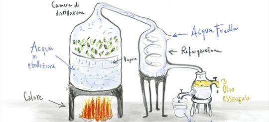 distillazione_olio_essenziale copia