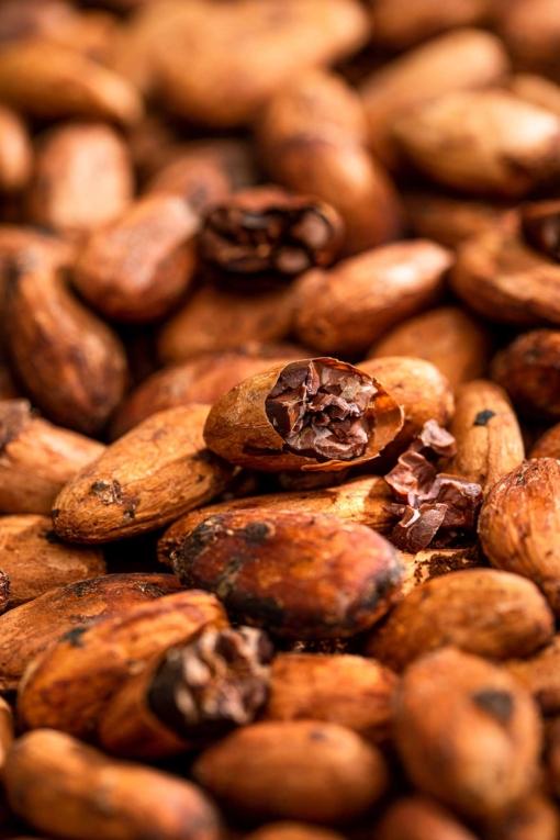 fave di cacao brasile