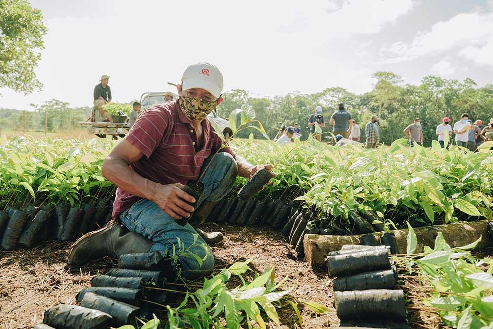 foresta guatemala - Olfattiva