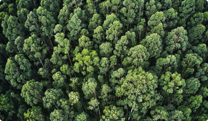 foresta - Olfattiva